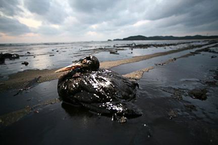 Marée Noire et dommage collatéraux