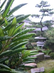 Gouttes de pluie
