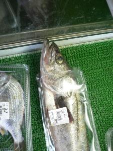 Un poisson qui vous fait de l'oeil