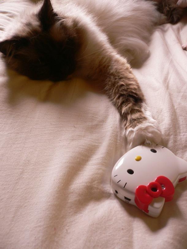 mon-chat-cest-une-star
